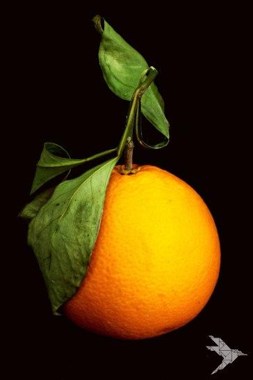 orange-web